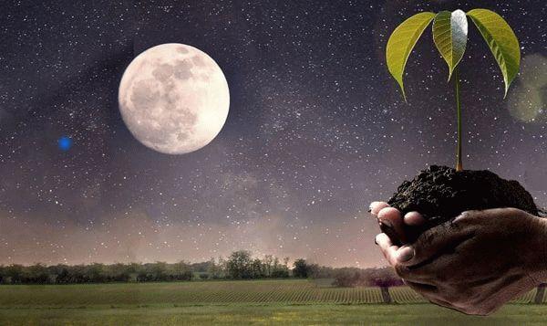 Луна и растение в ладонях