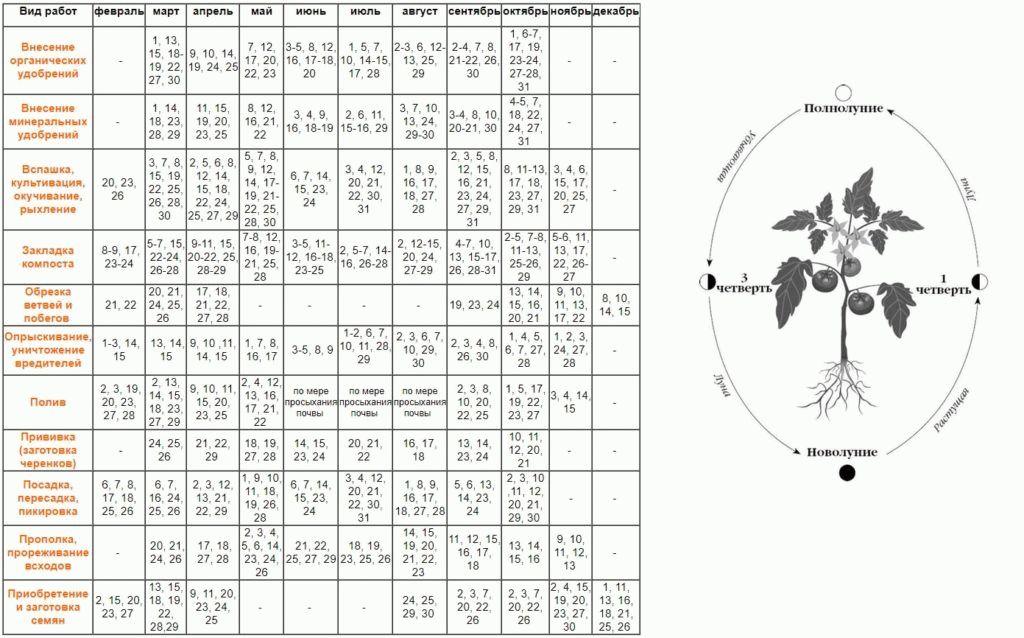Таблица проведения работ в саду и огороде