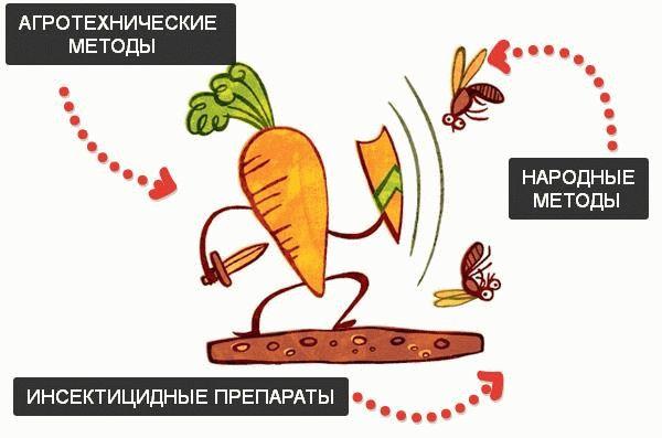 Борьба с вредителями моркови