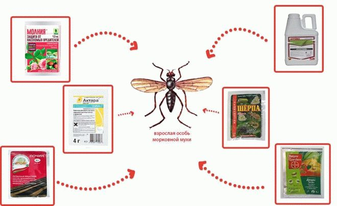 Инсектицидные средства от морковной мухи