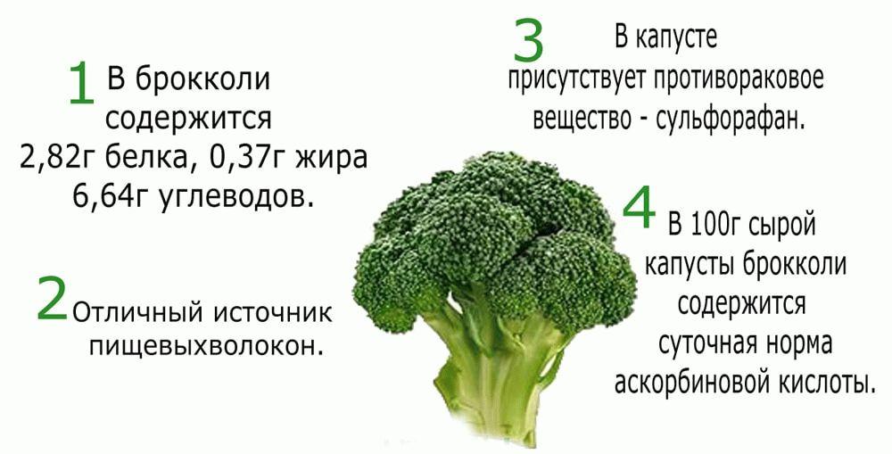 характеристики брокколи