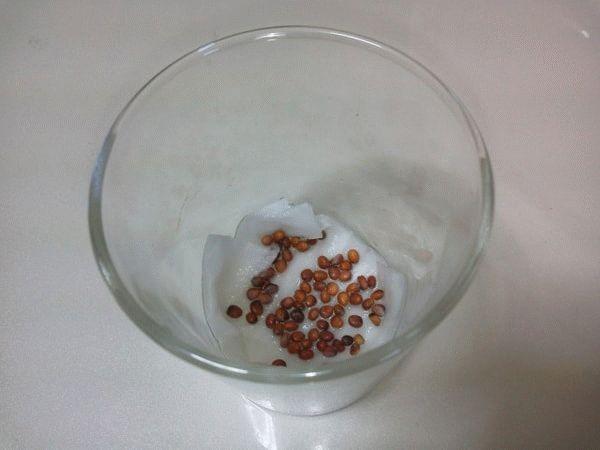 семена дайкона в стакане