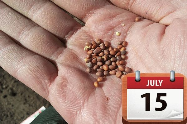 семена и календарь