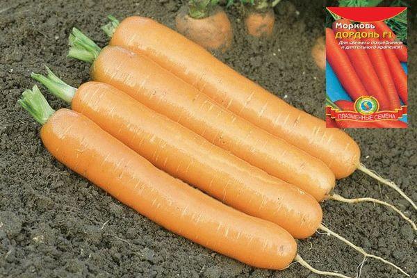 Морковь Дордон