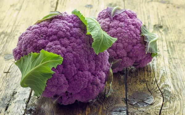 Фиолетовая цветная капуста на столе