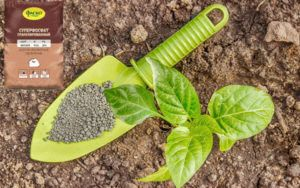 8 видов фосфорных удобрений: описание и применение