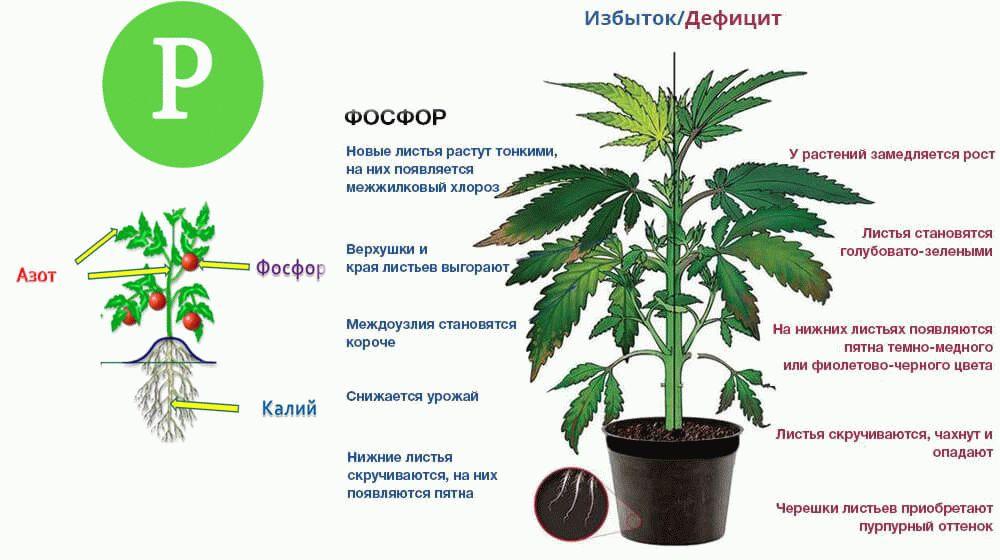 фосфор для растений