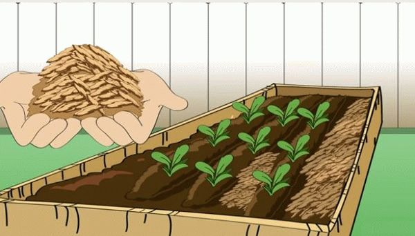 удобрение моркови