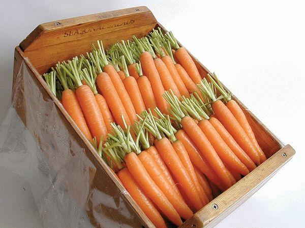 Хранение корнеплодов моркови в деревянном ящике