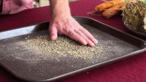 Как самостоятельно вырастить семена моркови