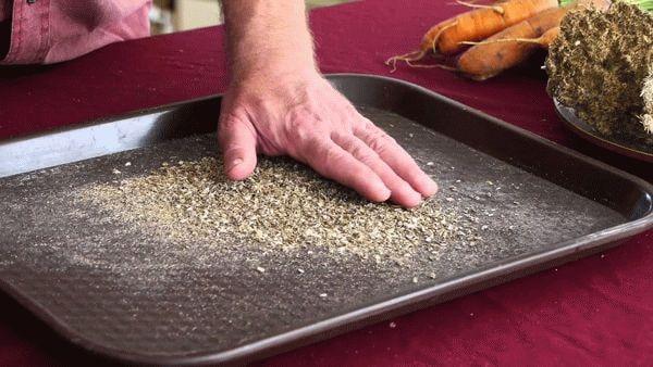 Семена моркови на столе