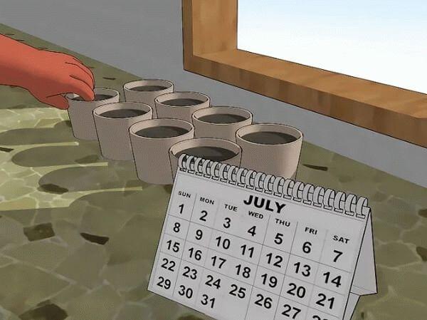 календарь посадки брюссельской капусты