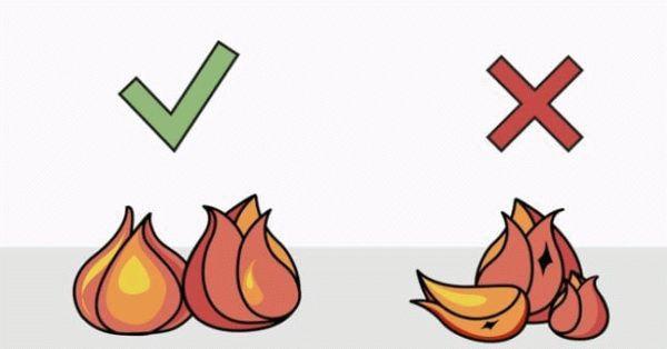 выбор луковиц тюльпанов для посадки