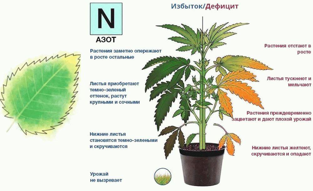 избыток и недостаток азота у растений