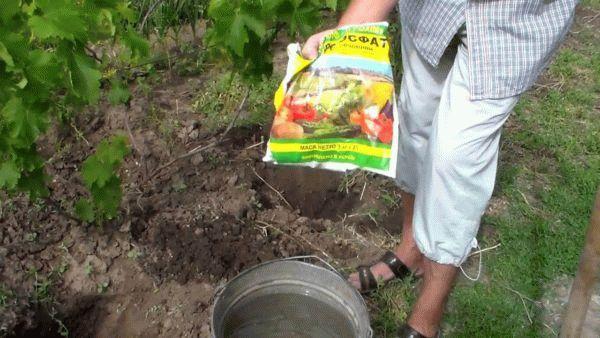 монофосфат калия для винограда
