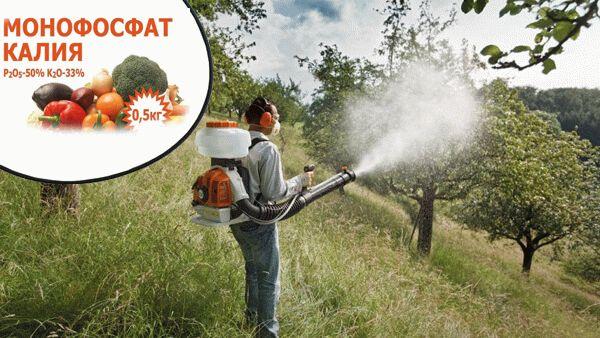 мужчина опрыскивает деревья