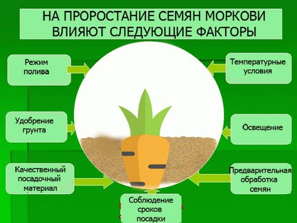 Факторы всхожести семян моркови