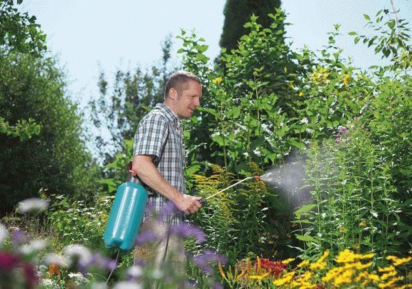 Мужчина опрыскивает огород