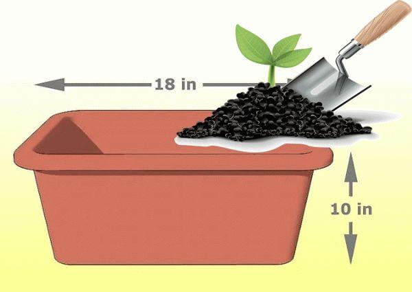 почва и контейнер