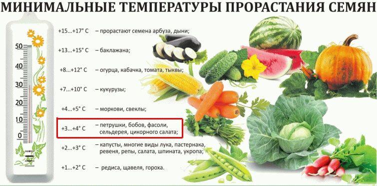 Температура прорастания семян