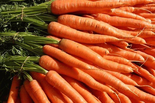 пучки молодой моркови