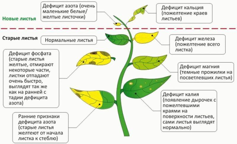 дефицит минералов у растений