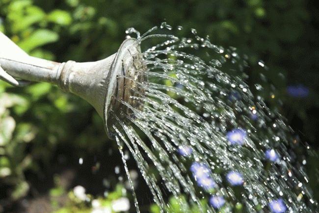 вода льется из лейки