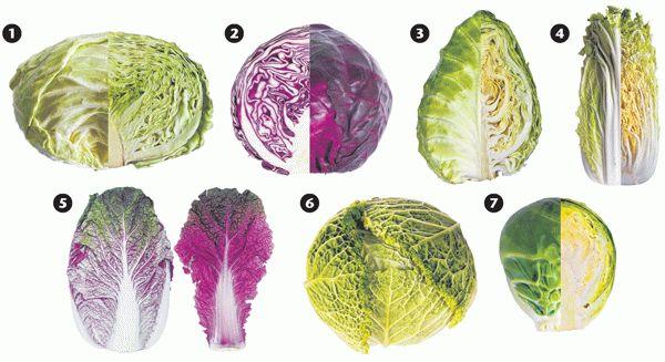 разные виды капусты