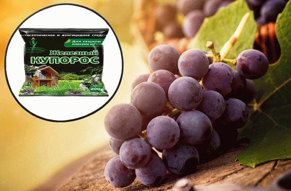 железный купорос и виноград