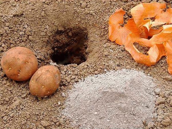 луковая шелуха для картофеля