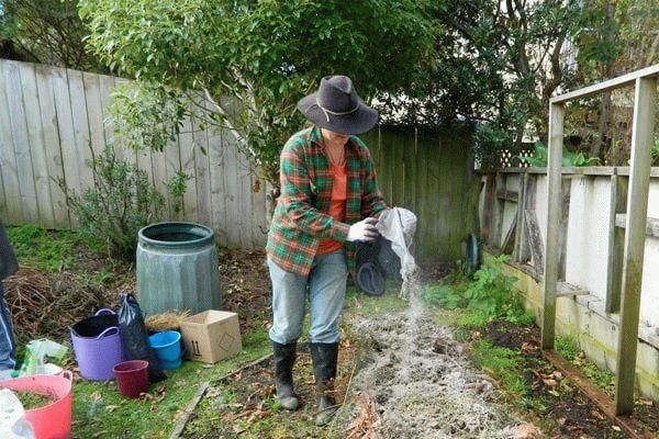 женщина посыпает огород золой
