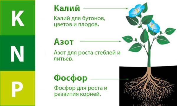 микроэлементы для растений