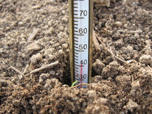 термометр в почве