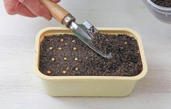 посадка семян перца