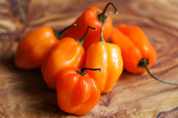 Как вырастить перец Хабанеро дома – Dachampion