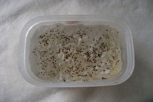 семена в контейнере