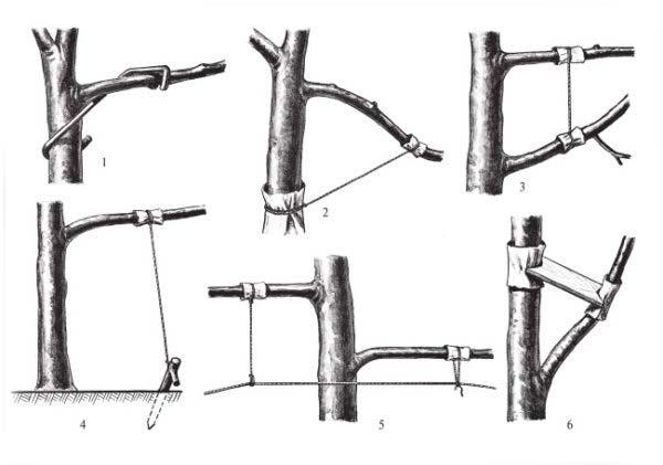 способы фиксации ветвей