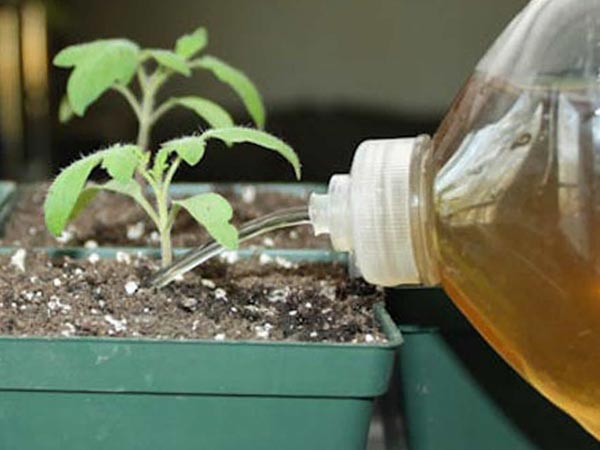 полив раствором йода