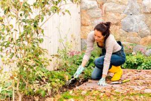 Что можно посадить под зиму на огороде и в саду