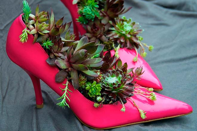 суккуленты в туфлях
