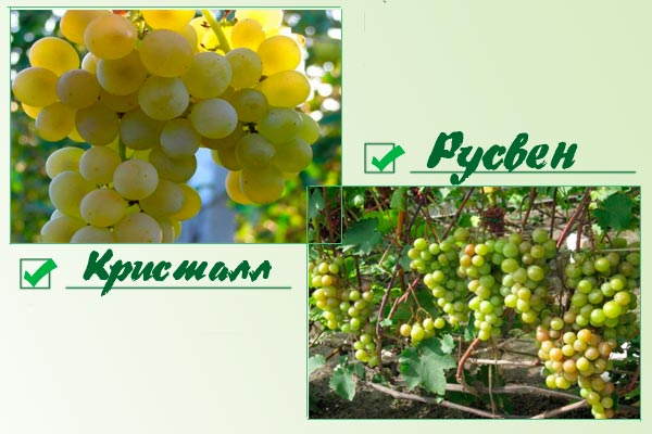 Кристалл и Русвен