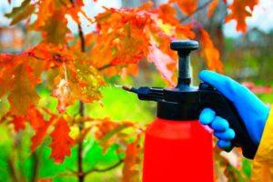 Осенняя обработка садовых растений: заслон для заболеваний и насекомых-вредителей