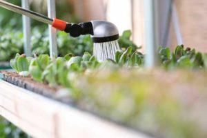 Как правильно поливать суккуленты в зависимости от времени года и вида растения