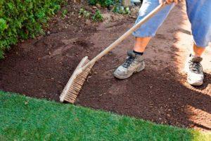 Сроки и правила посадки газона осенью