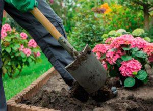 Особенности осенней посадки гортензии