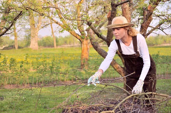 собирает ветки в саду