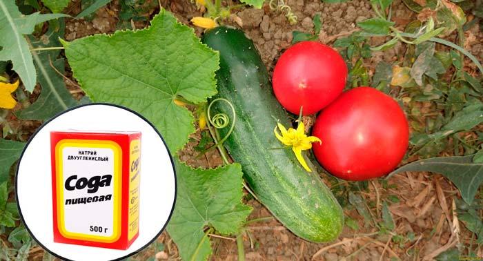 сода огурцы и помидоры