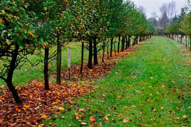 Уход за плодовыми деревьями и кустарниками осенью