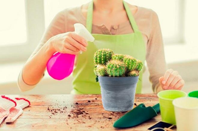 опрыскивание кактуса