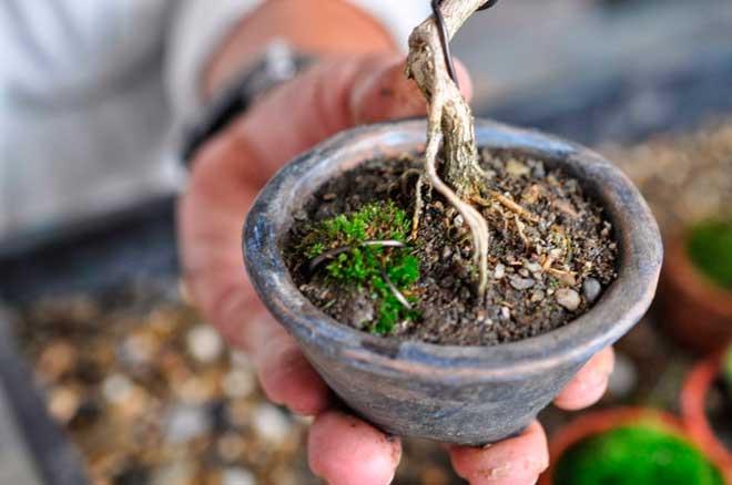 почва для бонсай